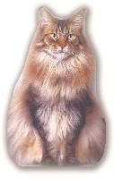 Chat, kit couture coussin en velours